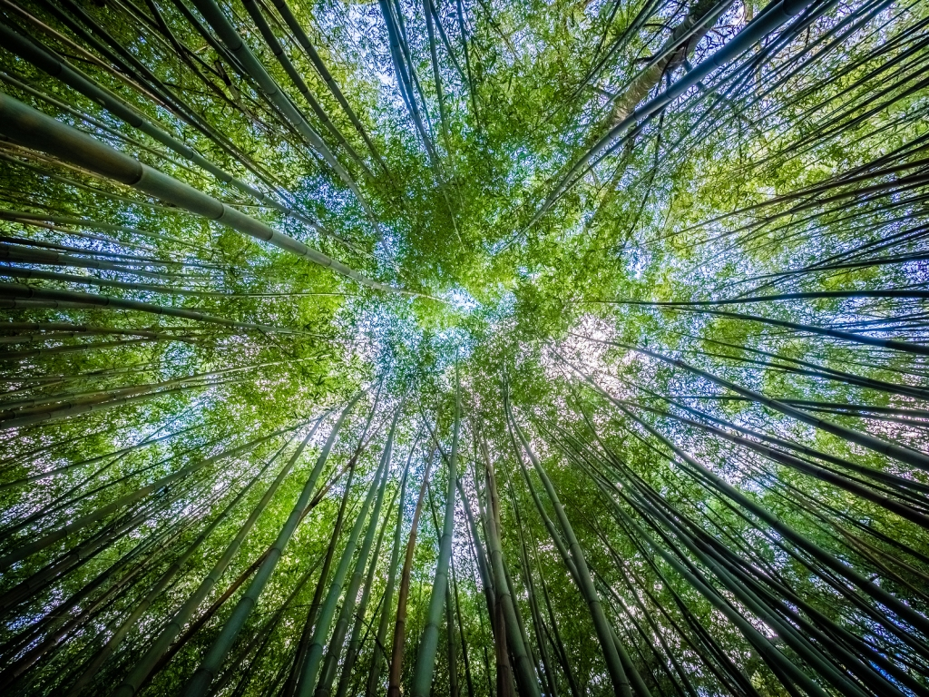 This image has an empty alt attribute; its file name is bigstock-bamboo-forest-120263375.jpg