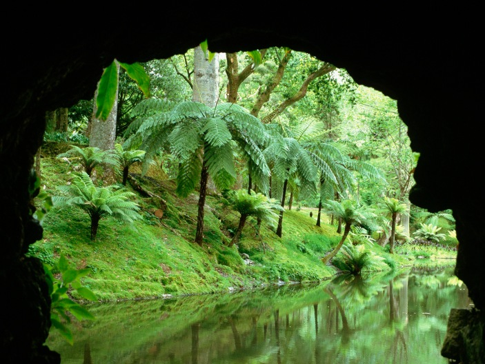 Fern Trees and River
