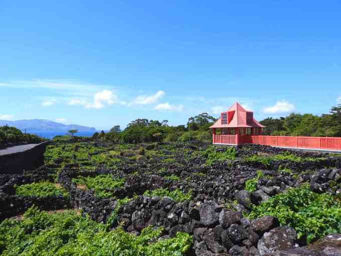 things-to-do-in-pico-azores-wine-museum-vineyards