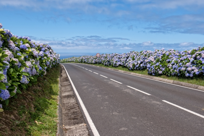 Country road with hydrangeas