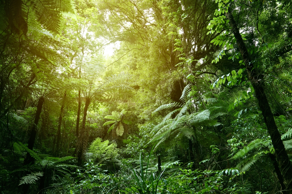 This image has an empty alt attribute; its file name is bigstock-lush-green-foliage-in-tropical-222683695.jpg