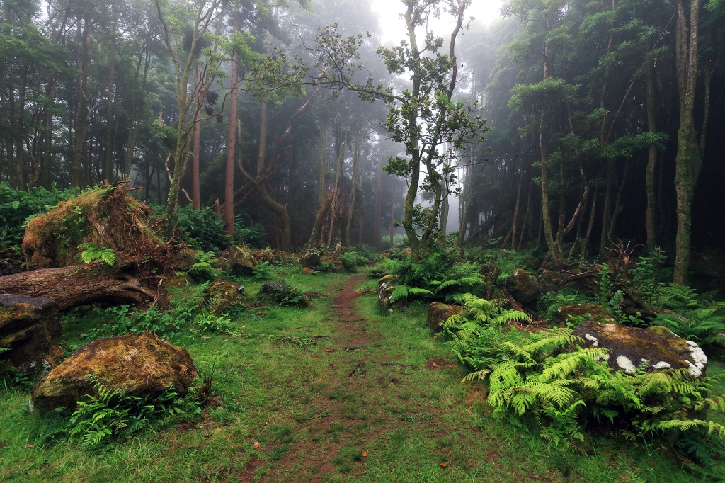 This image has an empty alt attribute; its file name is bigstock-tropical-forest-at-pozo-da-ala-206135944.jpg