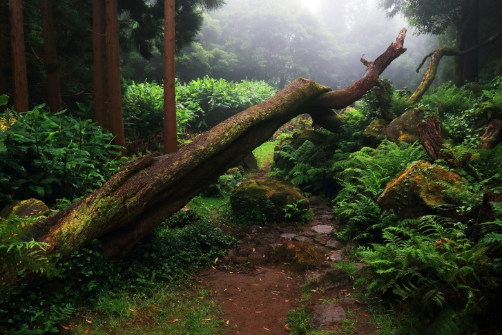 This image has an empty alt attribute; its file name is bigstock-tropical-forest-at-pozo-da-ala-206136016.jpg