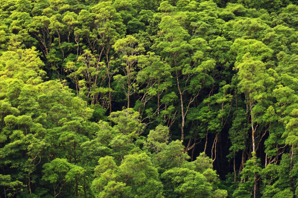 This image has an empty alt attribute; its file name is bigstock-tropical-rain-forest-206030191.jpg
