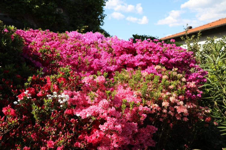 Azores Gardening and Flowers